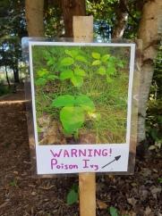 pioson ivy. (1)